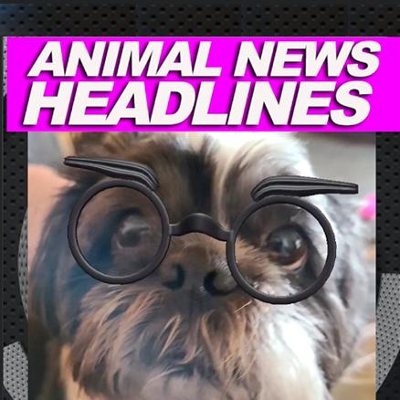 Animal Headlines